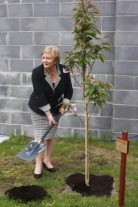 Minister Frances Fitzgerald plants our Tree of Hope on the opening of the Refuge 28th April 2014